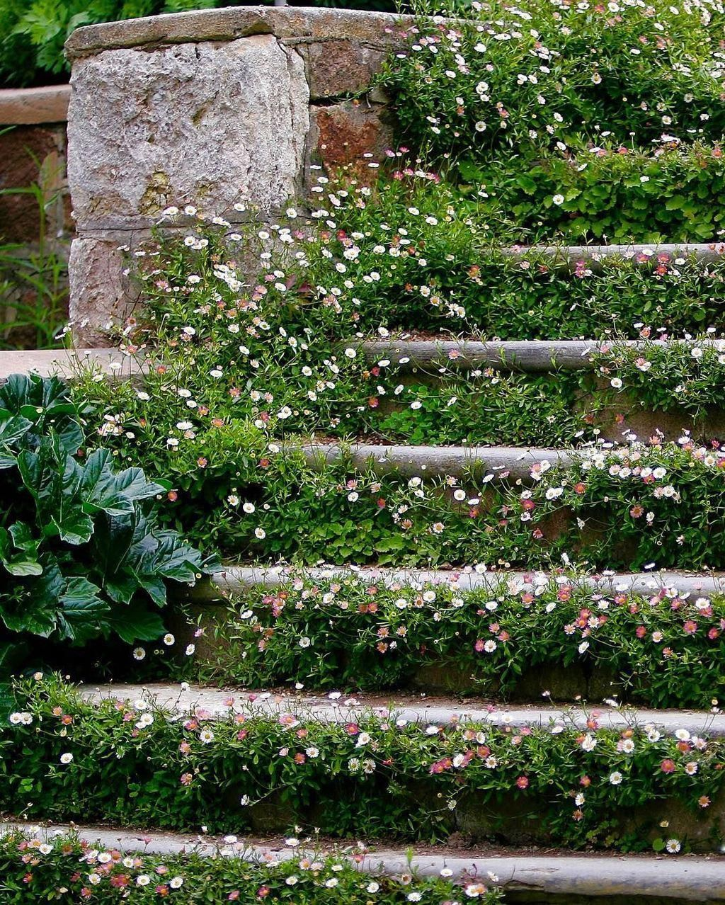 25+ unique lawn-edging ideas to totally transform your