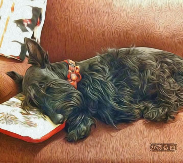 Awwh Little Baby Sweet Dreams With Images Scottie Terrier