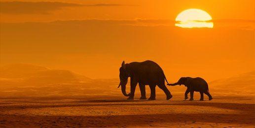 afrika landschaftsbilder | Acrylbilder Afrika Elefanten ...