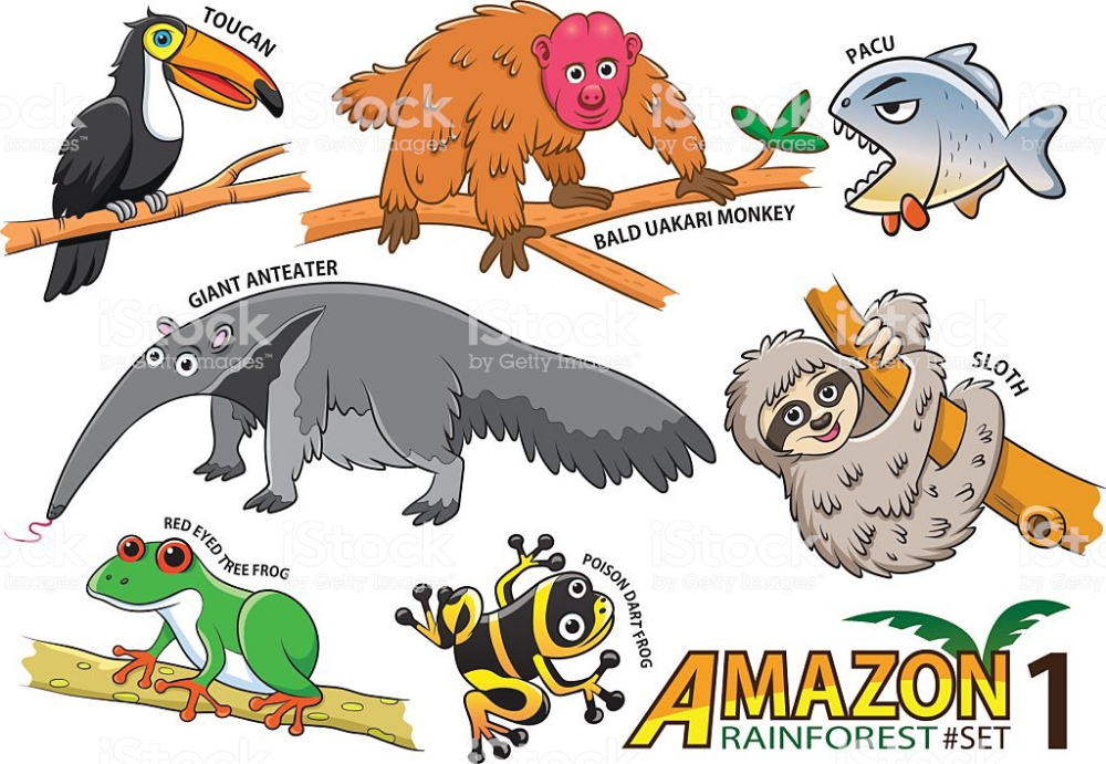 Dibujo De Animales Dela Selva Peruana Buscar Con Google Cartoon Animals Pet Birds Amazon Animals