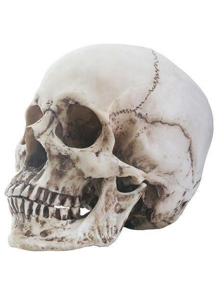 Save on Skull Head Statue by Summit Collection at InkedShop.com, and get coupon codes and deals every day!
