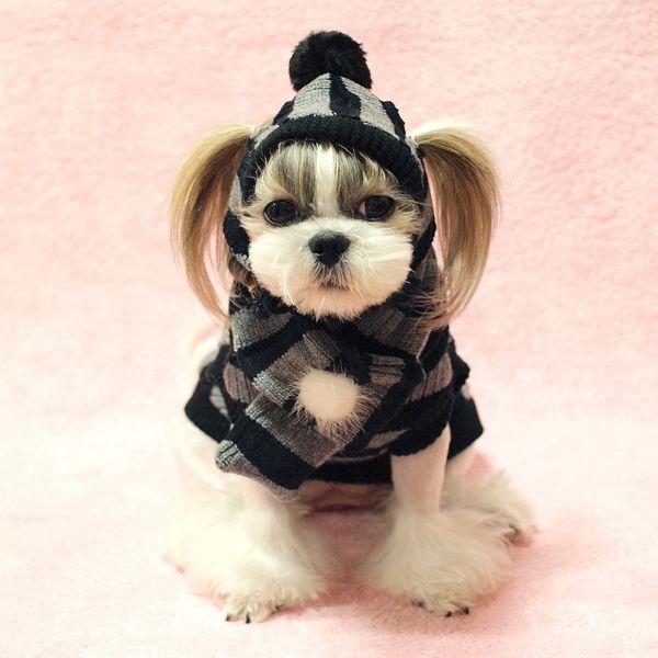 tricoter un bonnet pour chien