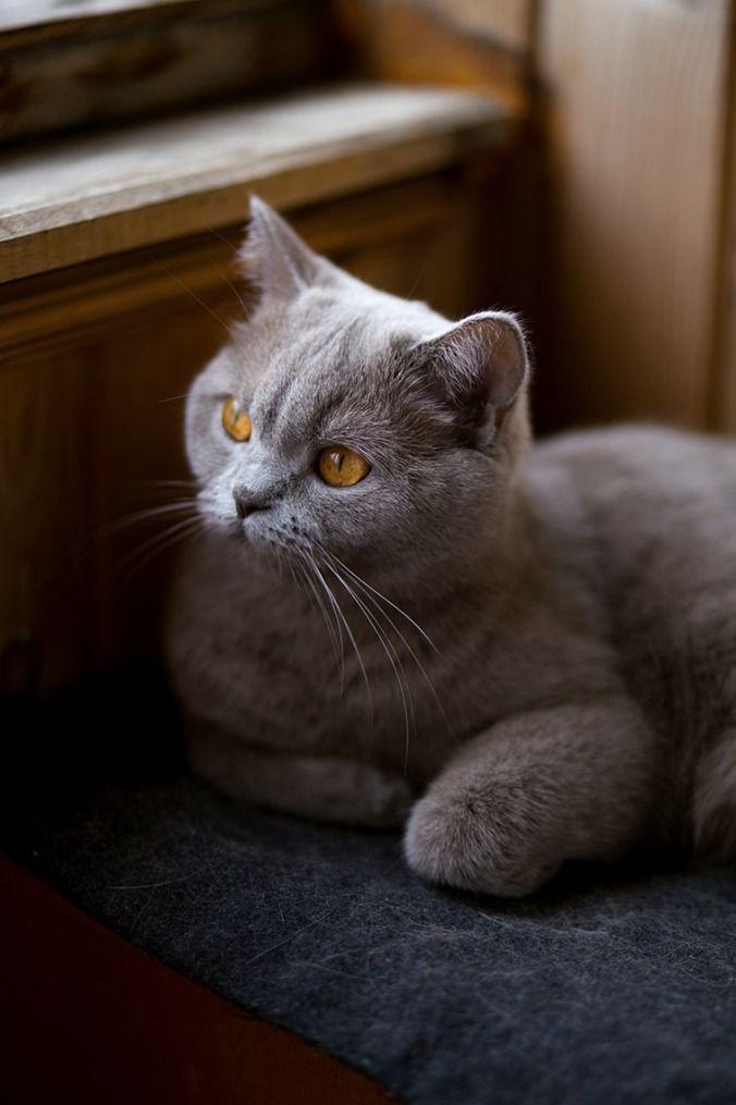Kitteh Wisdom De Poor Wish To Be Rich De Rich Wish To Be Happy De Single Wish To Be Married And De Married Wish To Be Grey Kitten Cats And