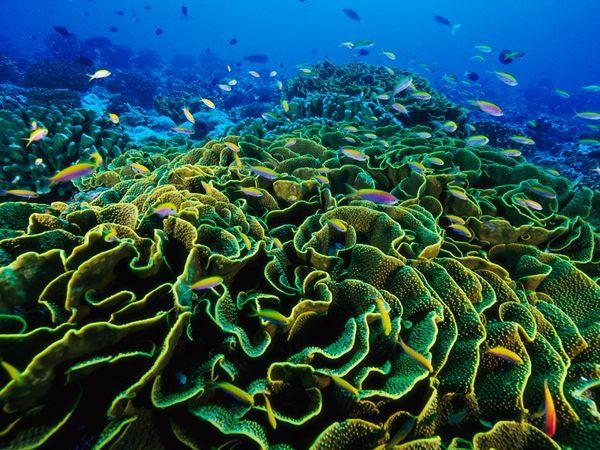 Underwater Landscape Photos Underwater Wallpapers Download Photos National Geographic Phoenix Islands Coral Reef Under The Sea