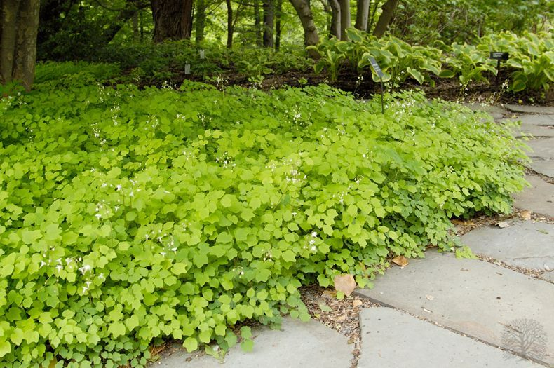 Image Result For Vancouver Hexandra Woodland Garden Plants