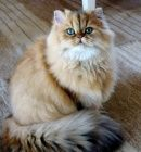 Proud Cat with Incredible Coat