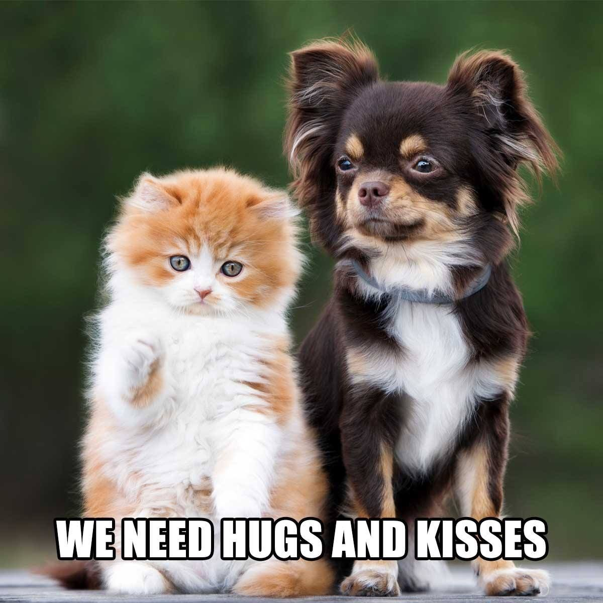 Pin by Carol Valeri on Just too cute puppy love Dog cat