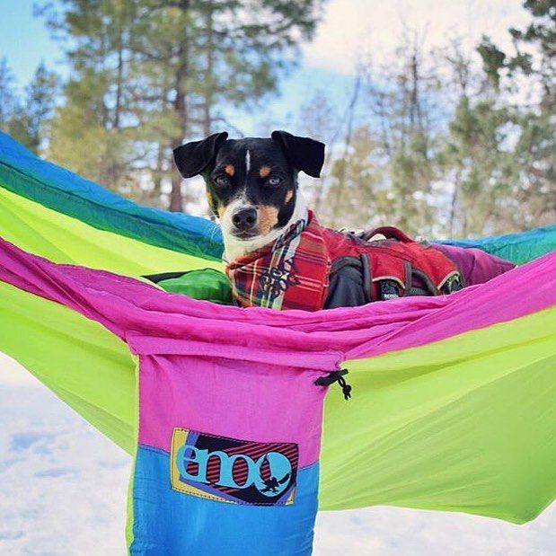 Eno Hammock Are Available In Store Now Available In Navy Blue And Retro Colored Tag Your Hammock Buddy Credit Chip_n_quin Expatbibes Hammocklife