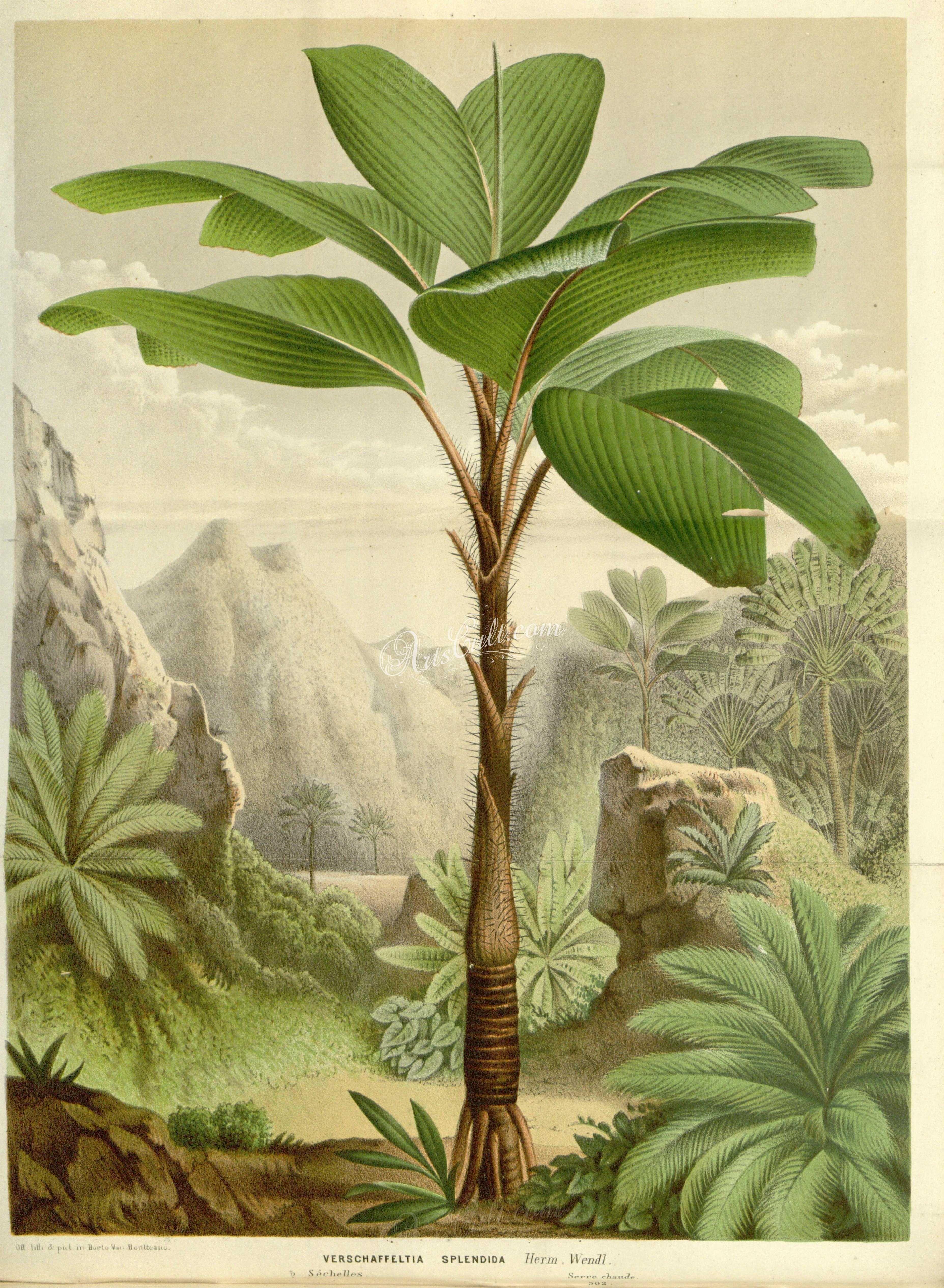 House Plants Palm Trees