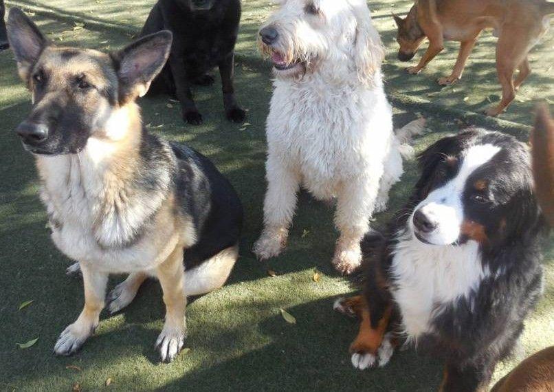 Hobnob Pet Daycare Your Metro Denver Pet daycare, Pet