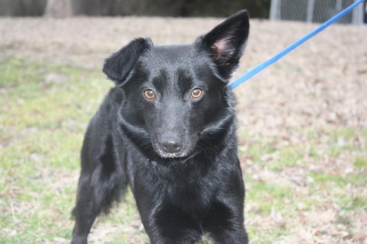 German Shepherd Puppies For Sale In Conway Arkansas Ideas