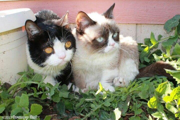 tard and pokey pics   Tard and Pokey ♡   Grumpy Cat...