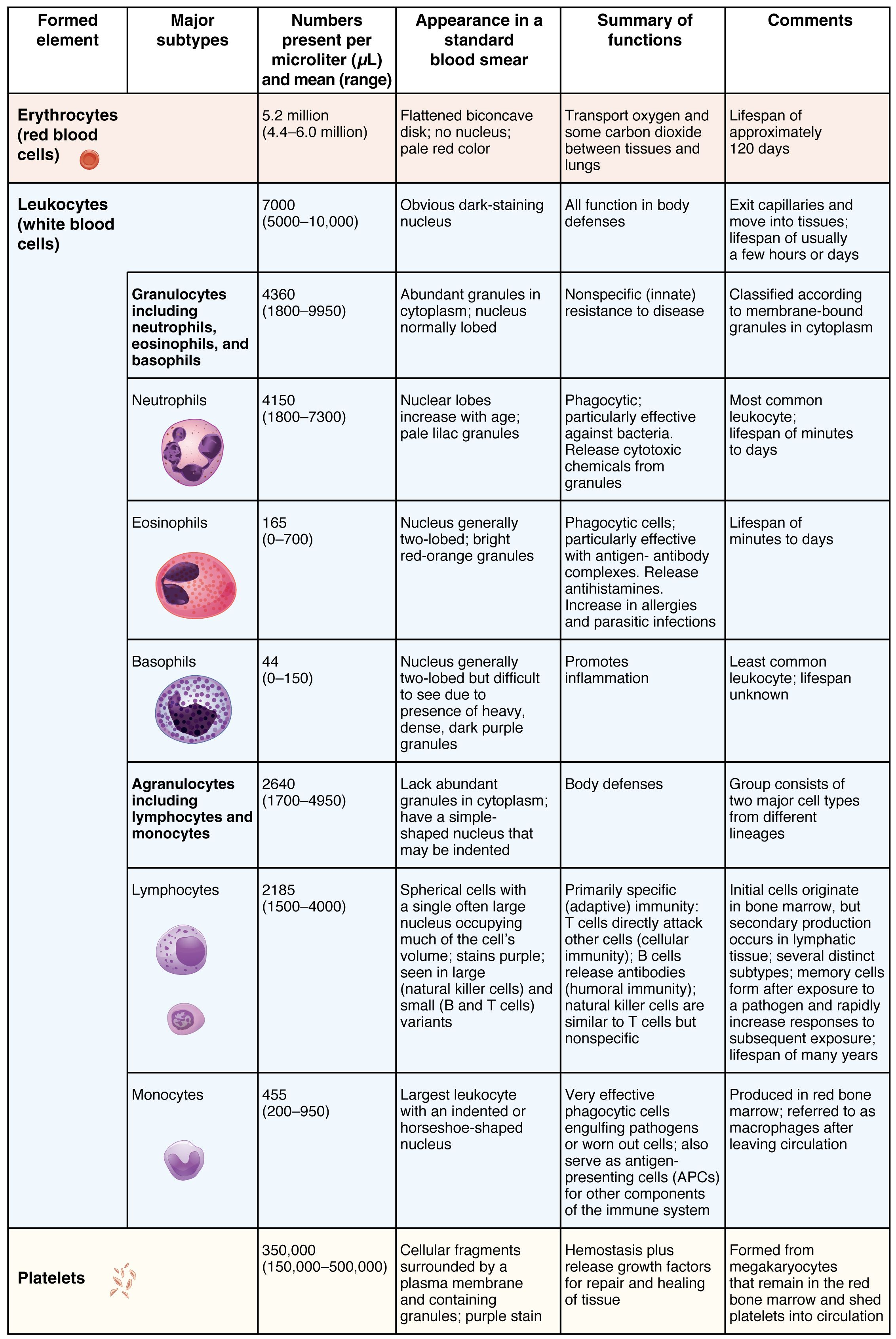 Red Blood Cell Functions
