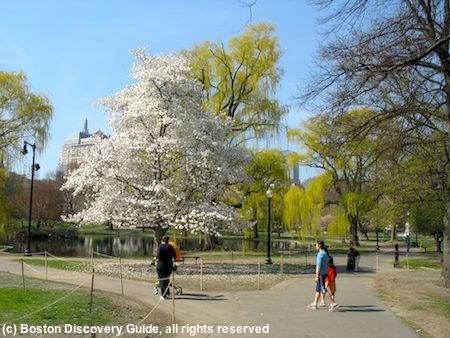 Boston Weather In April With Images April Weather Canada