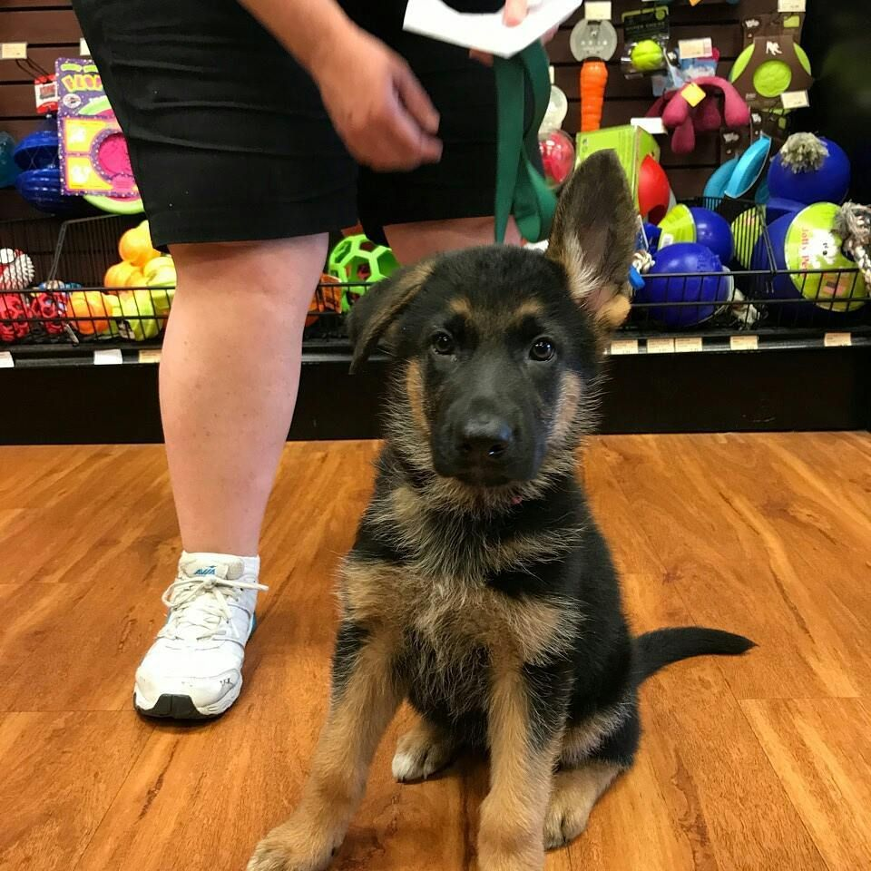 Cutecustomeralert Lucy An 8 Week Old Pup Shops For Her