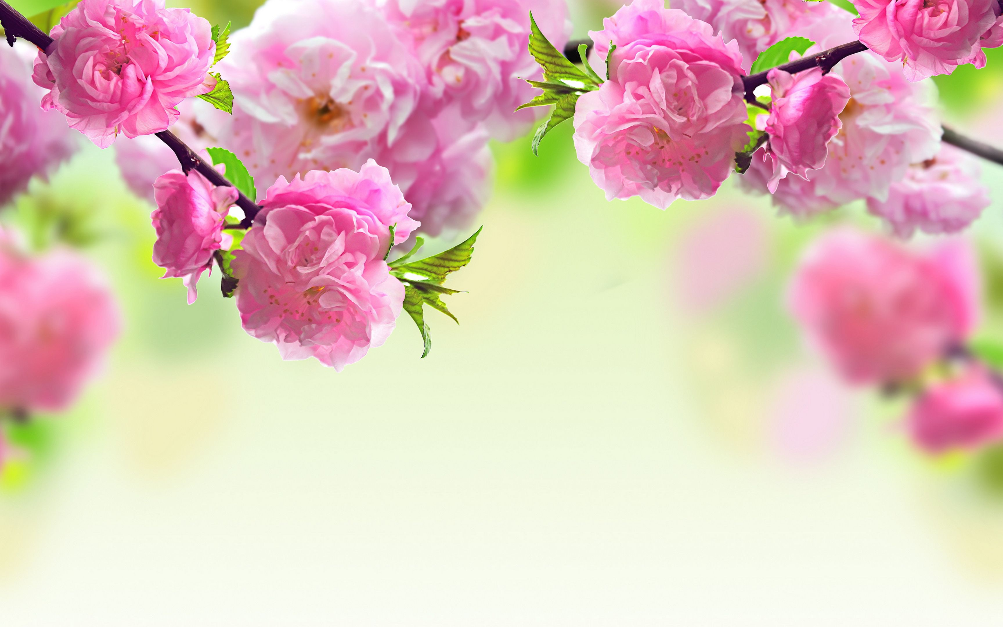 Spring Flowers Desktop Wallpaper 3456x2160 Plants Desktop Wp S