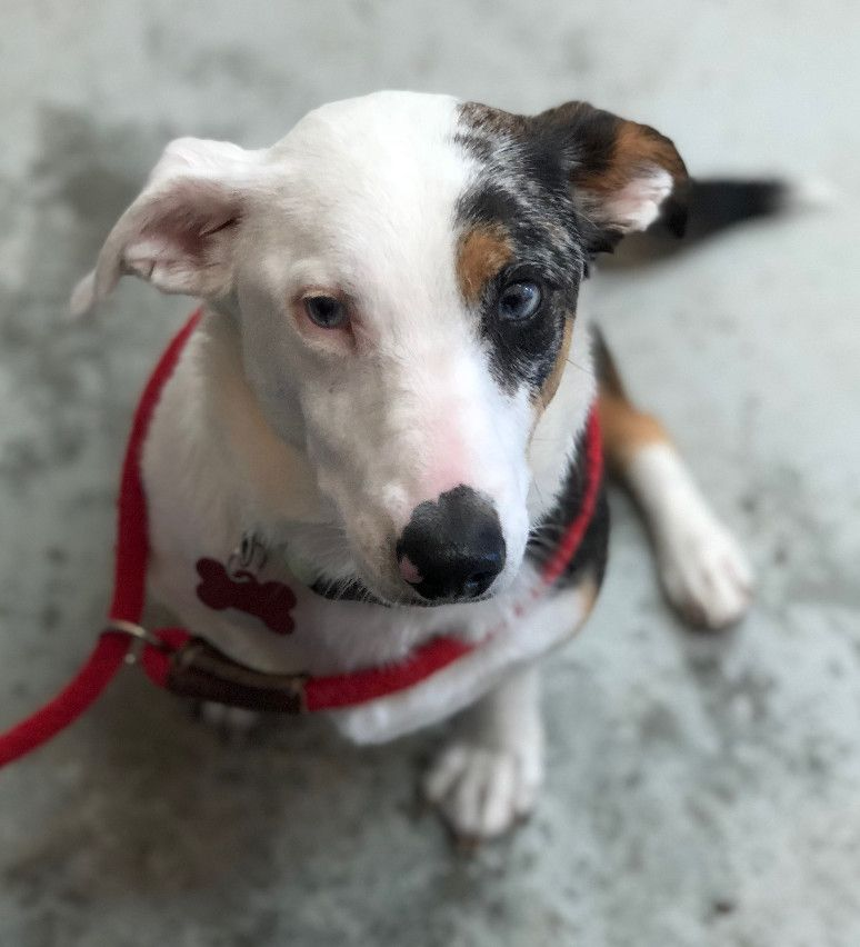 Adopt Wall E On Dogs Rescue Dogs Dog Id