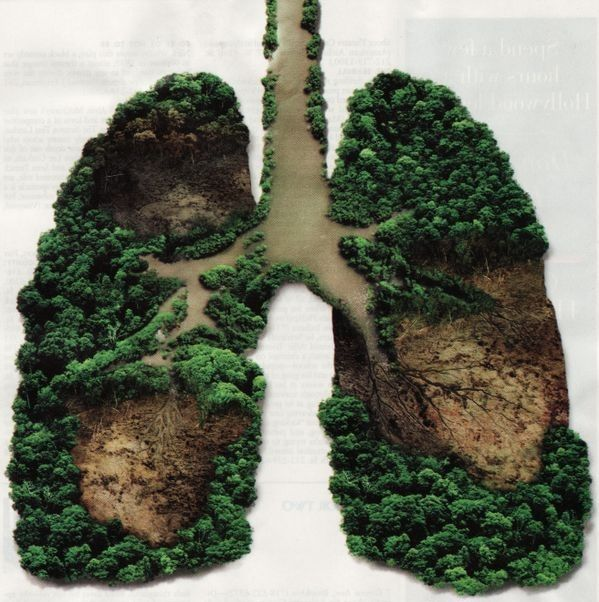 Image result for lungs of the earth
