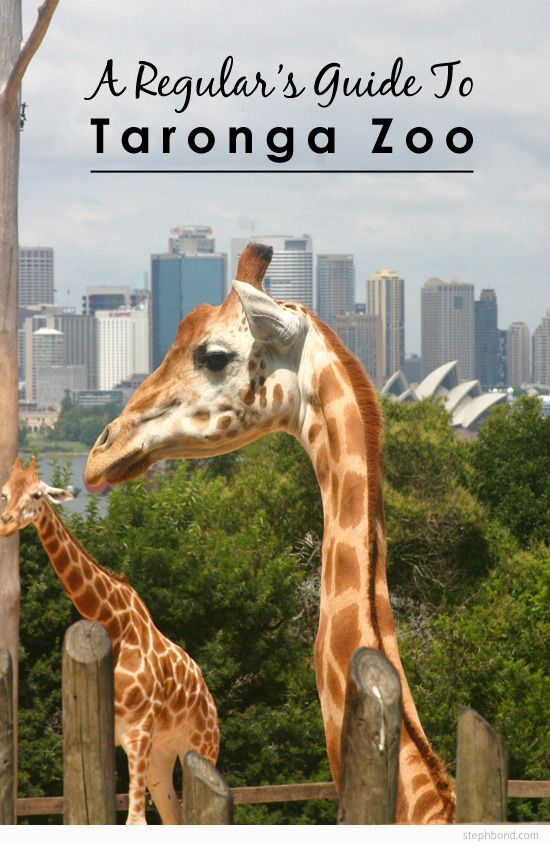 For All Who Wish To Visit Taronga Zoo During Your Stay At Cremorne Point Manor This Guide Will Be Useful Bondville A Regular S Guide Zoo In The Zoo Animals