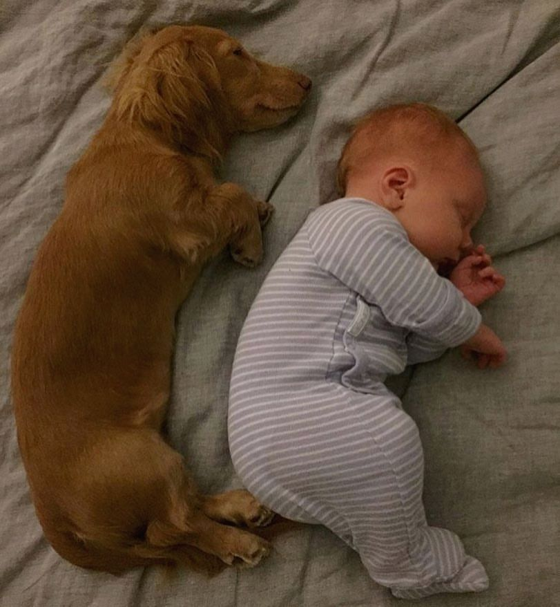 Dachshund Dog And Kid Cute Kids And Cute Dogs Cute Dachshunds And
