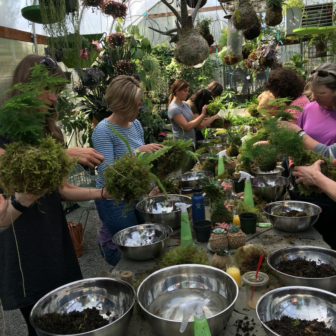 Kokedama Work At Dig Nursery On Vashon Island Taught By Marzipan Seattle Hosted