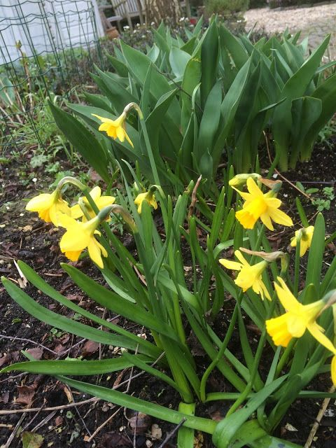 The Entertainment Whacko: Spring Has Sprung in Nieuw-Helvoet.