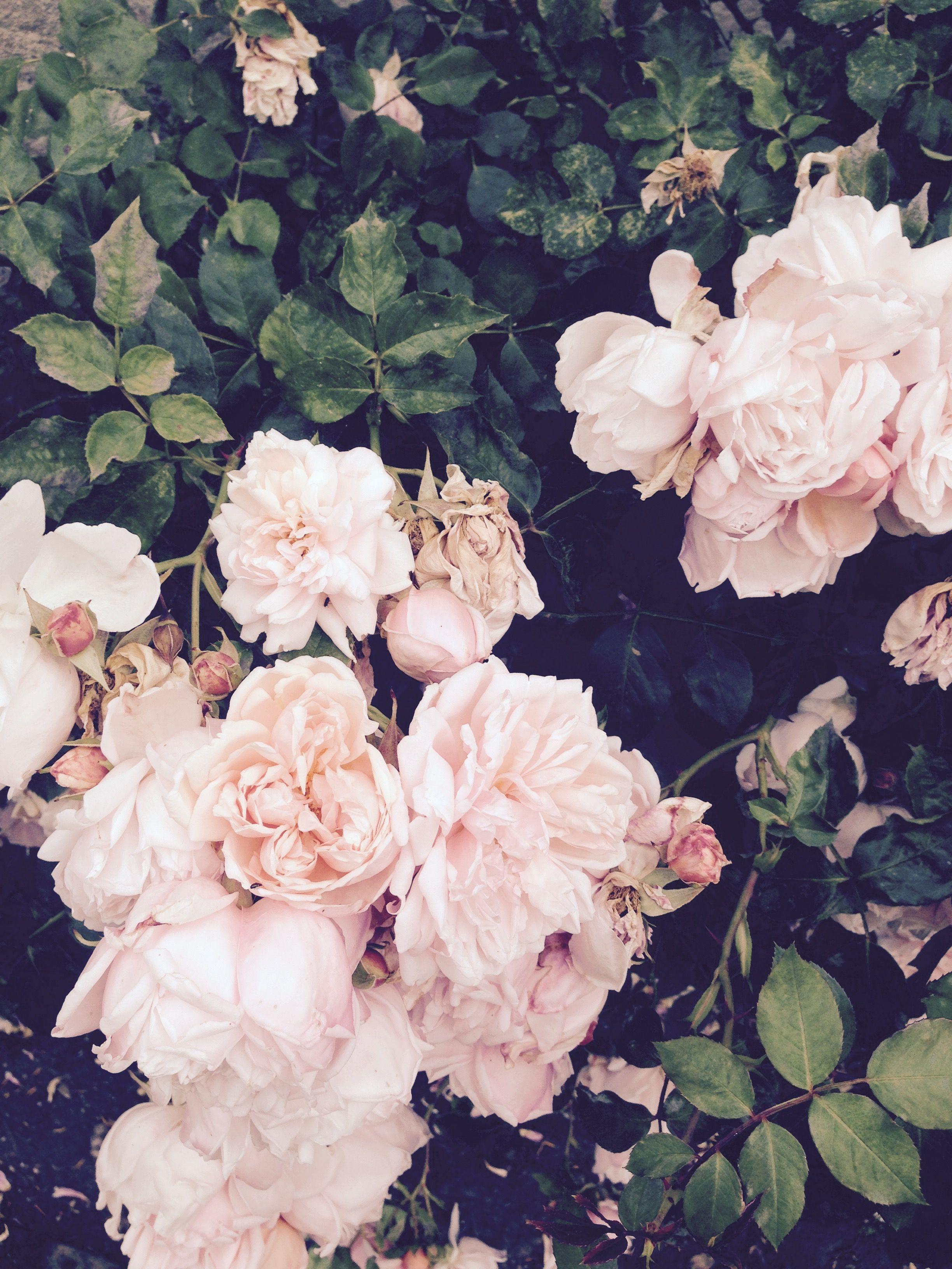 foto de Pinterest cosmicislander Flower aesthetic Flowers