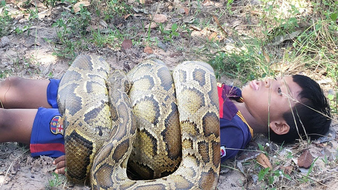 Amazing four children catch big snake with bare hand how