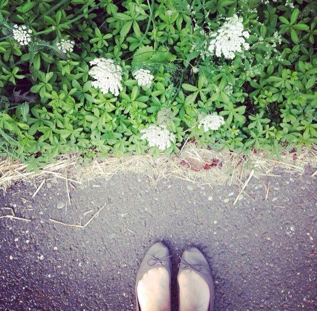 Les fleurs peuvent guérir ??!! Fleurs - ballerines - la mode - santé - nutrition - blog - blogueuse - beauté - sérénité - malade - remède naturelle - jolie - belle
