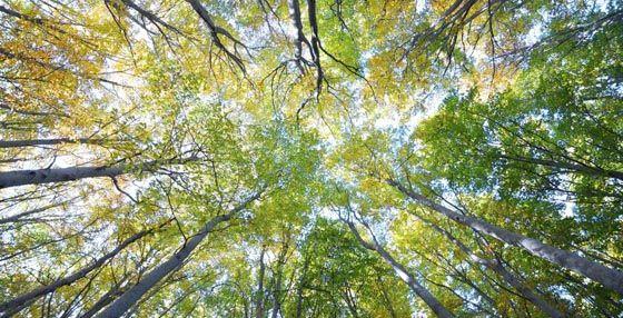 Bosque en el Moncayo, paisaje de otoño
