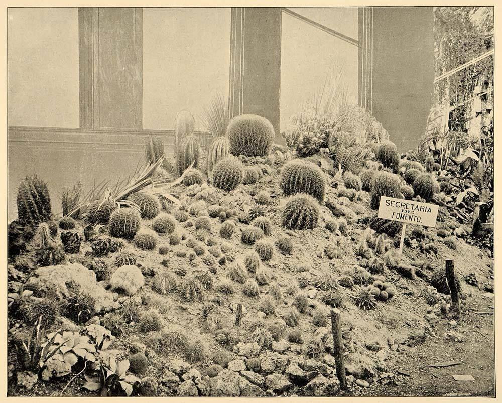 1893 Chicago World S Fair Mexico Cactus Garden Print Original Historic Image World S Fair World S Columbian Exposition Garden Print