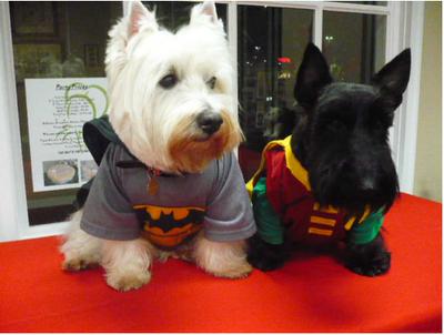 Batdog & Robin. awwe!