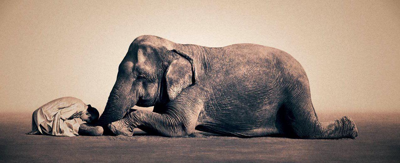Resultado de imagen de IMAGENES ARTISTICAS ANIMALES ELEFANTES