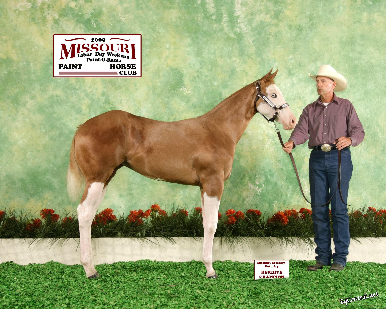 Pierce Paint and Quarter Horses