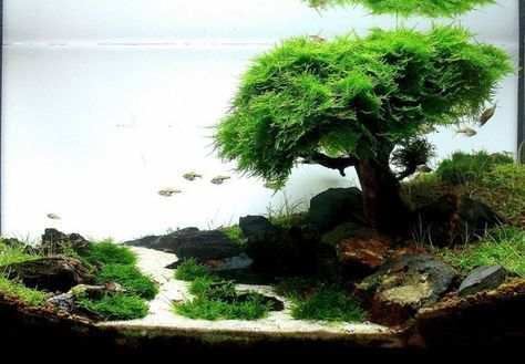 nano aquarium einrichten beispiele aquarium pinterest aquarium aquarium einrichten und. Black Bedroom Furniture Sets. Home Design Ideas