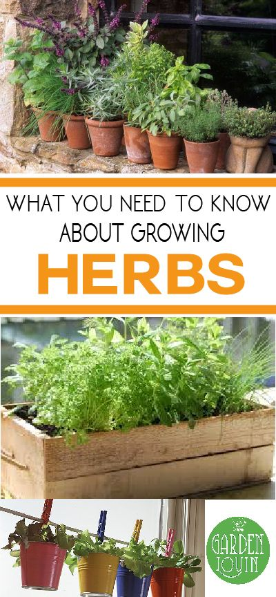 What You Need To Know About Growing Herbs With Images Home