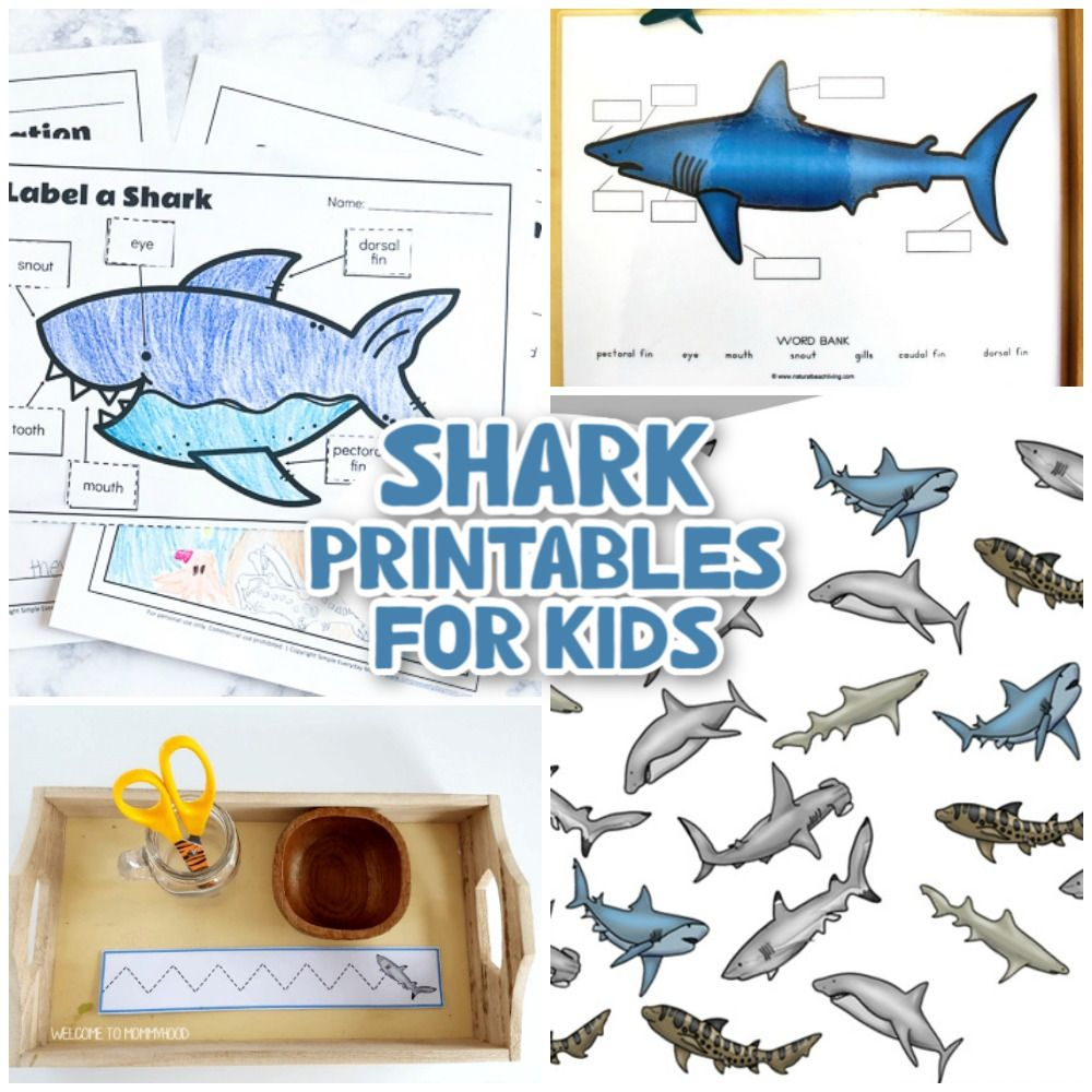 33 Best Shark Printables Templates And Activities Natural Beach Living In 2021 Shark Printables Shark Shark Coloring Pages [ 1000 x 1000 Pixel ]