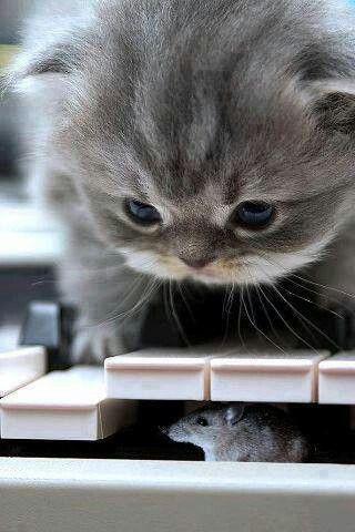 La curiosidad mato el.....
