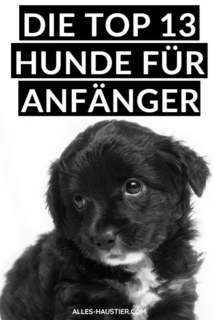 Hunde für Anfänger Das sind die 13 besten Anfängerhunde