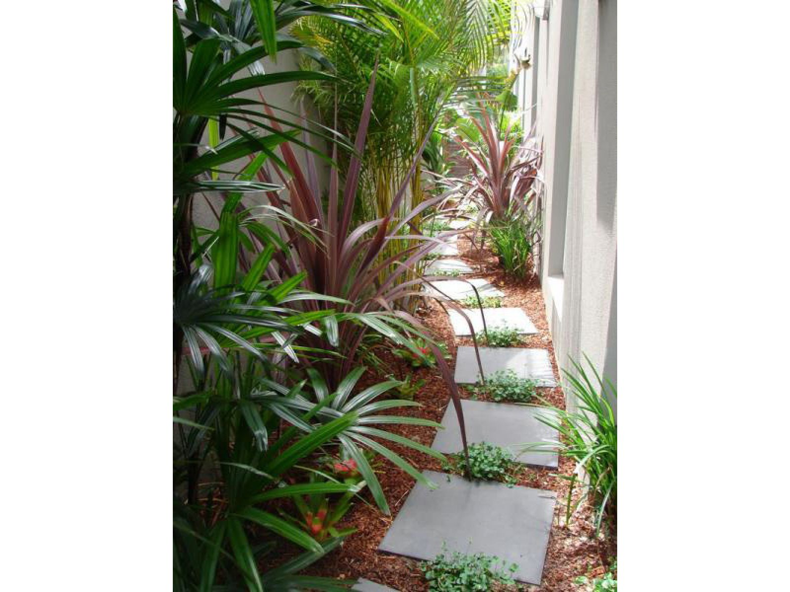 Great Use Of The Narrow Space Between The Side Of The House And The Fence Landscaping Fusionlandscapes Side Garden Narrow Garden Small Backyard Landscaping