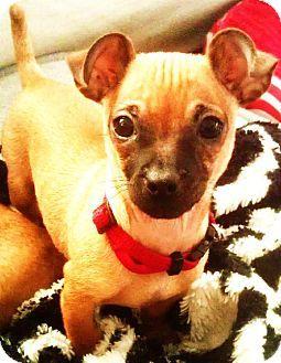 Ca San Diego Ca Pug Dachshund Mix Meet Noble A Puppy For