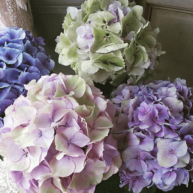 おやすみジャルダン 秋色アジサイ 夢の色… 今夜も 皆さま 良い夢を…✨ http://violettes.ocnk.net/