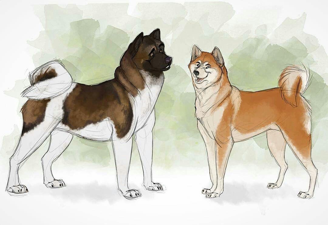 Sinistra Left American Akita Destra Right Akita Inu Japanese Dog Sketch Animal Drawings Dog Drawing