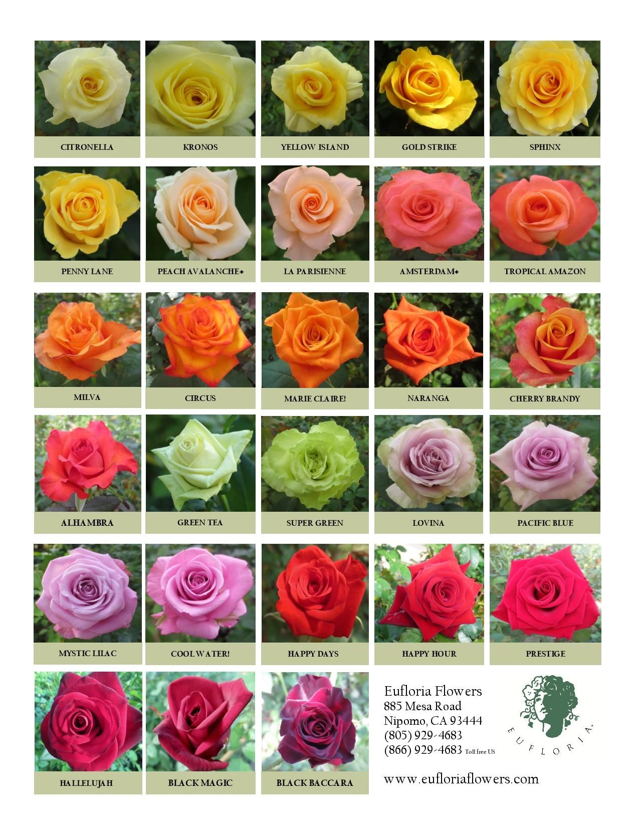 Traditional Premium Roses Flower Meanings Flower Names Flowers Perennials