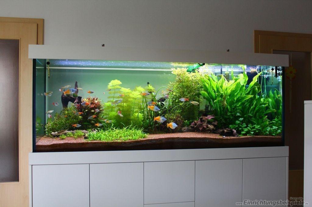 Pin By Trent R On Aquarios Aquarium Fish Aquarium Fish Tank Fish Aquarium Decorations