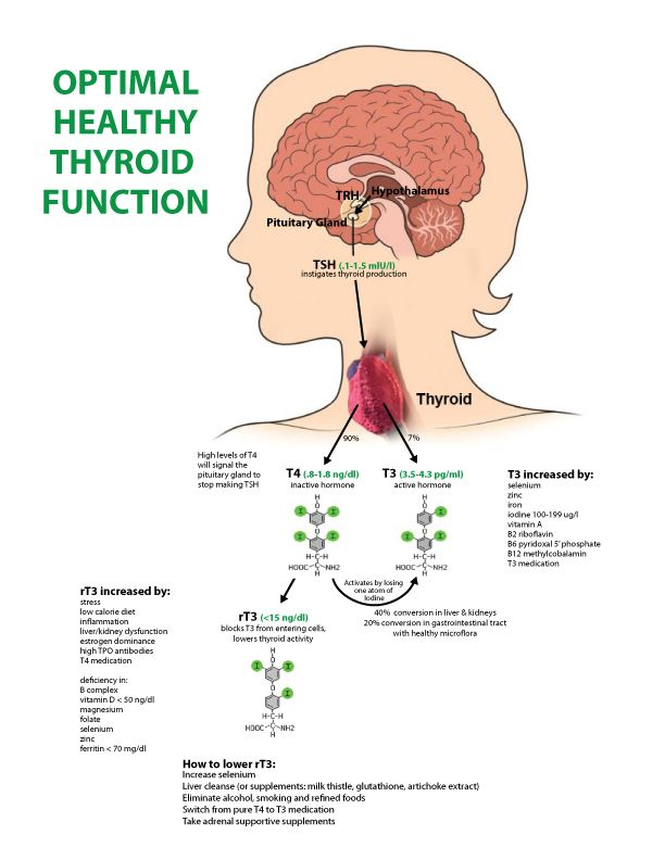 Optimal Healthy Thyroid Function Diagram I Created This To Help My