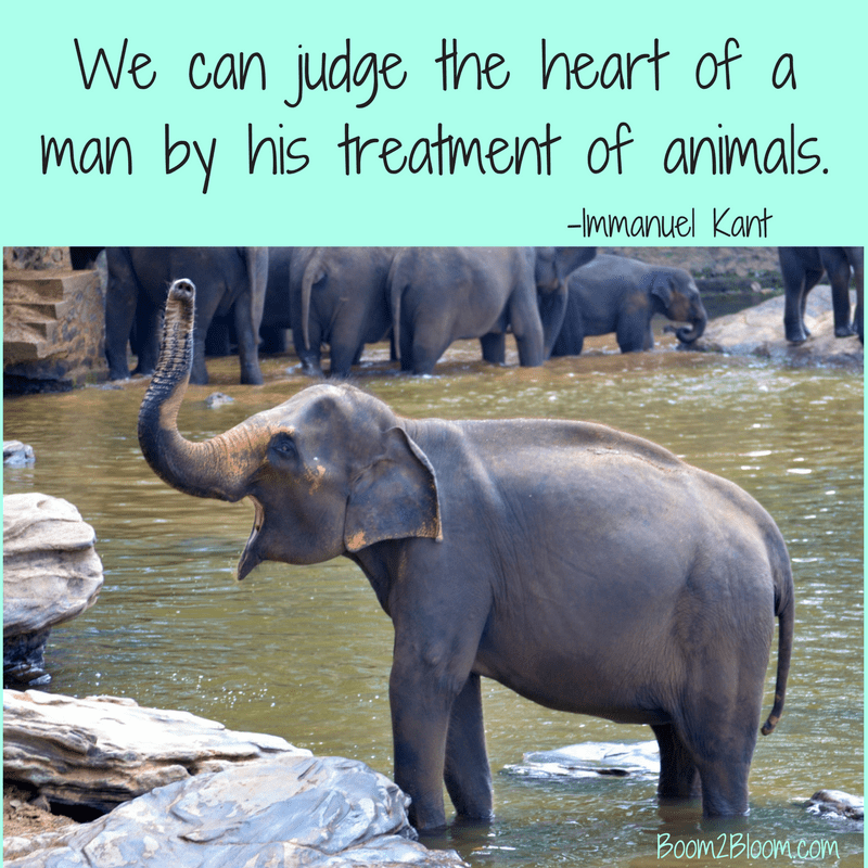 Animal Quotes Heart & Soul Mates Animal quotes, Animals
