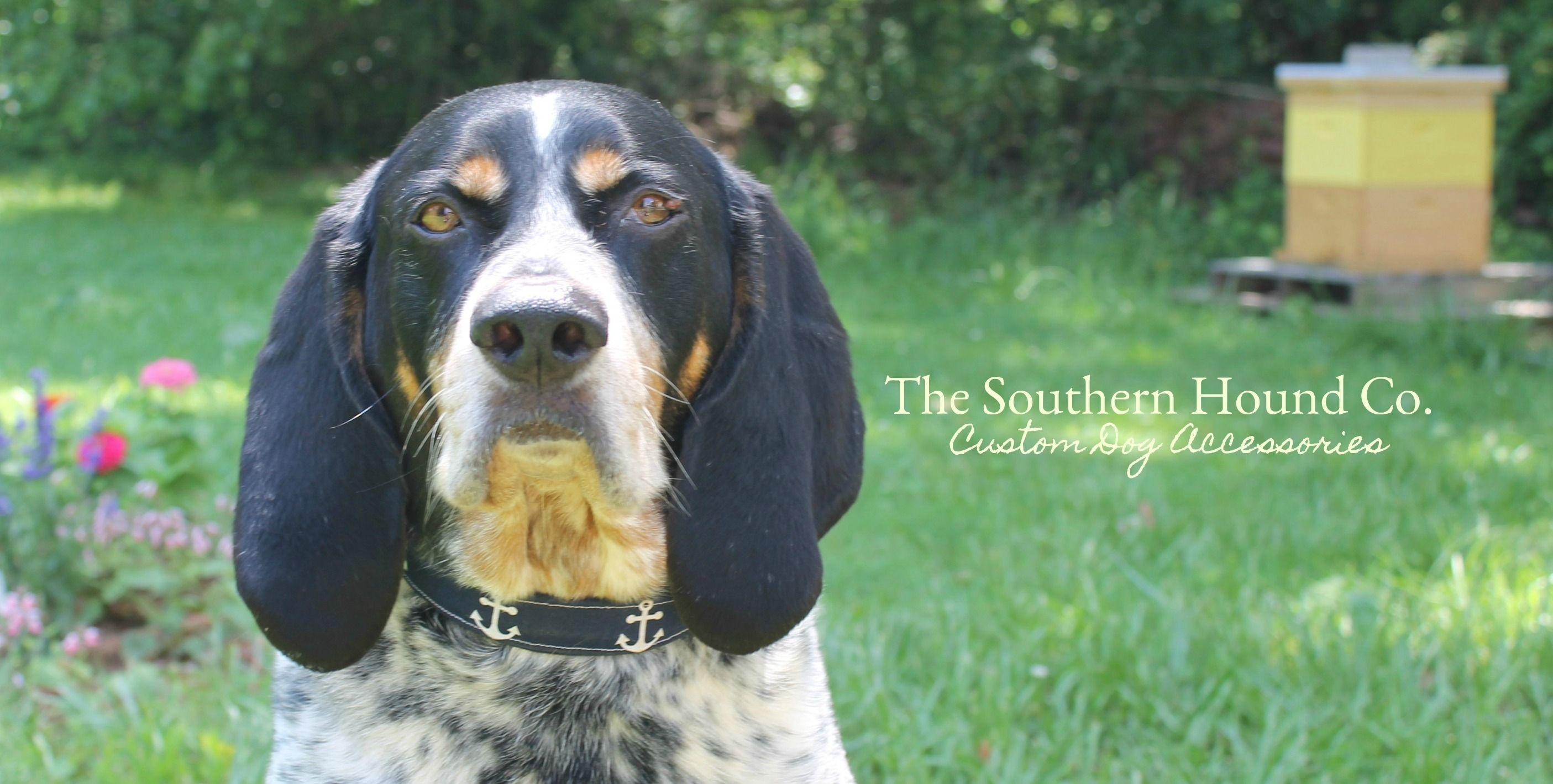 The Southern Hound Co Creates Custom Handmade Dog Accessories We