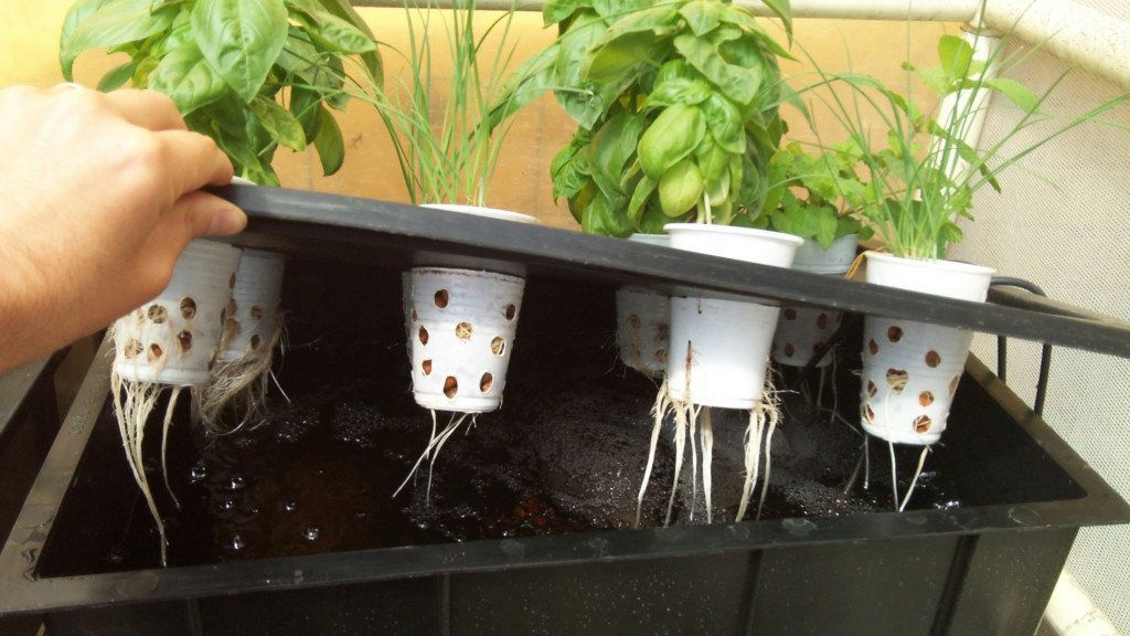 Diy hydroponics kits hydroponic central with images