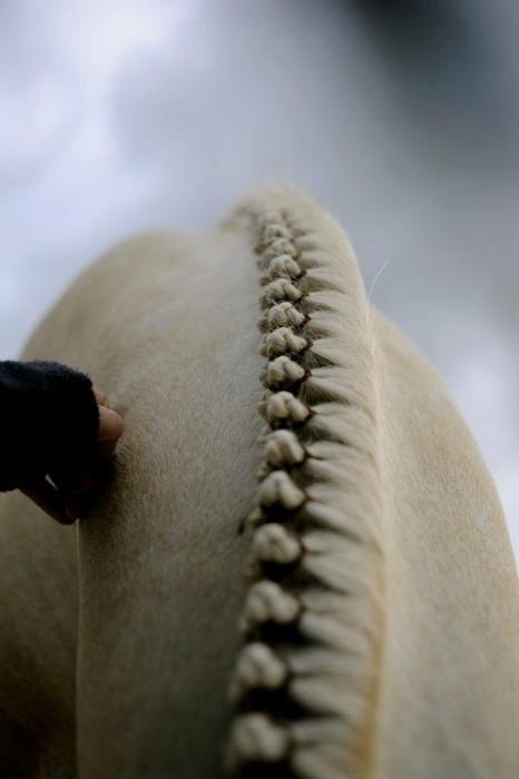 horse english braid